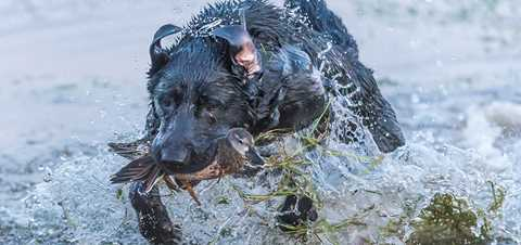 Ten Performance Tips for Retrievers
