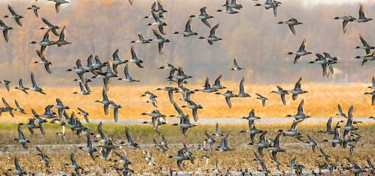 Insider Guide to Public-Land Duck Hunting