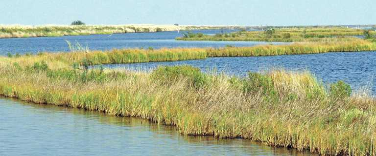 Marsh terraces help reduce wave action, allowing vegetation to become reestablished.