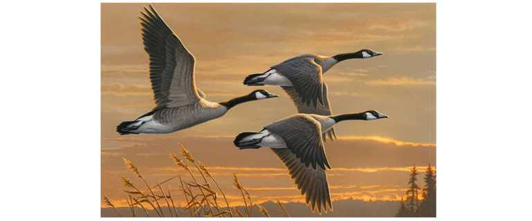2016 Federal Duck Stamp Winner