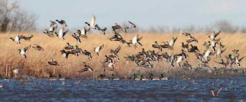 2016 Waterfowl Forecast