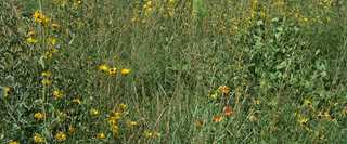The South Dakota grass restoration project involved seeding a mix of native grasses and forbs.