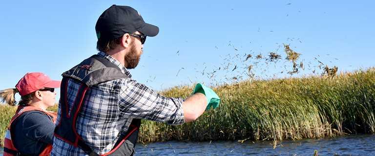 Chris Houghton, University of Wisconsin - Green Bay, spreads wild rice in lower Green Bay in November.