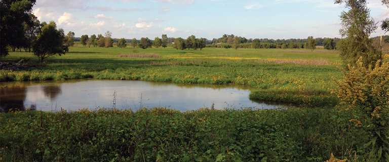The Jenkins Marsh project in Illinois already is starting to return to a natural state.
