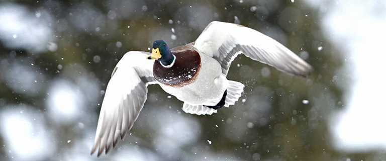 Waterfowler S Holiday Wish List