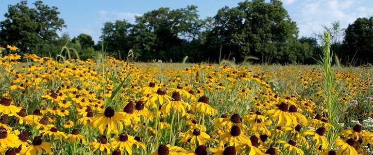 Washtenaw Food Hub field in Ann Arbor growing new habitat.