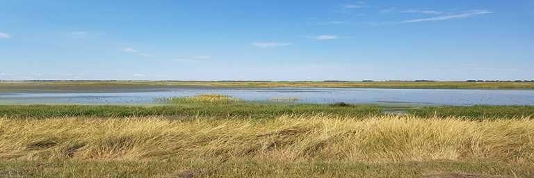 Shorebirds at Cheyenne Bottom Wildlife Area. Ducks Unlimited and partners are working to restore habitat at the wildlife area.