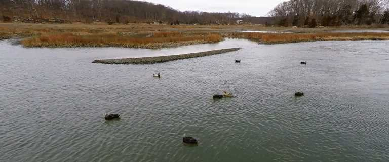 Researchers used decoys in Connecticut to test aerial surveys with drones.