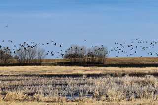 Palustrine emergent wetlands on the Monolith Ranch.