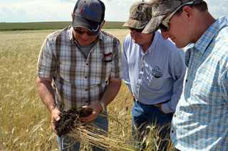 South Dakota landowner Chris Lee shows S.D. Conservation Manager Steve Donovan and donor Steve Raymond how cover crops improve soil health.