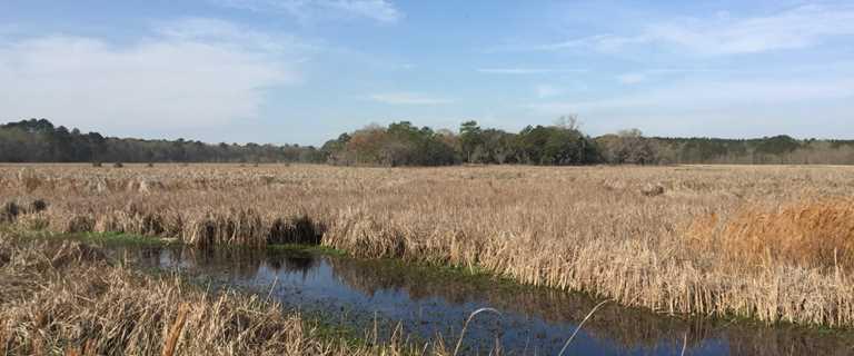 Rice fields on Kirkfield easement.