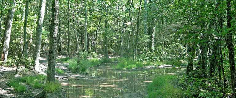 This 28-acre tract of land on the Cape May peninsula is another example of New Jersey land protection by Ducks Unlimited and our partners.