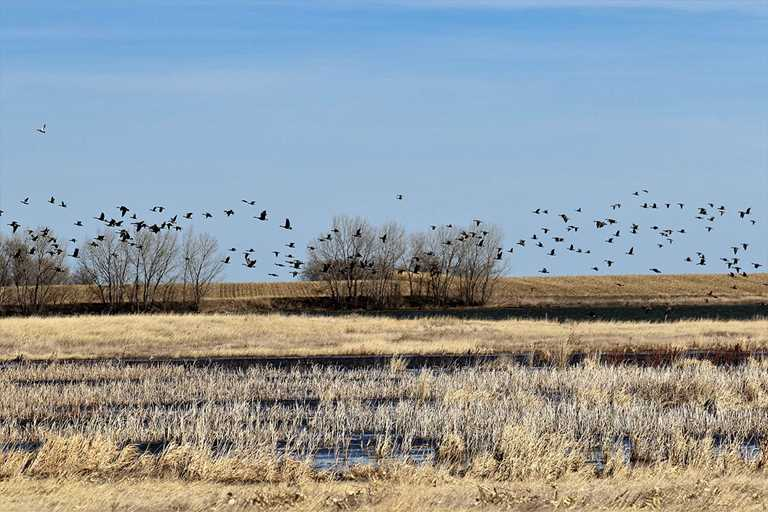 A Ducks Unlimited project provides additional water for the Bump-Sullivan Reservoir in Wyoming