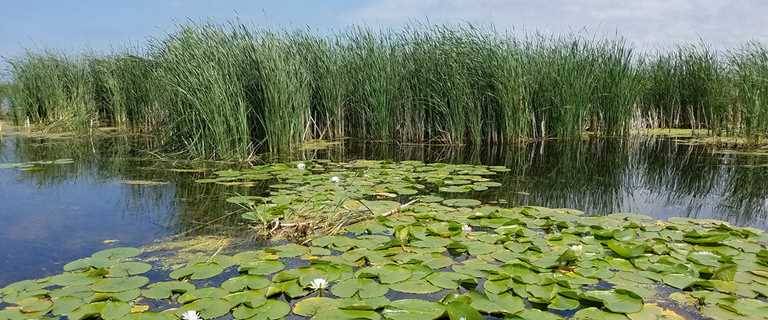 Lower Green Bay habitat, like the Duck Creek Delta pictured here, is getting a boost from several organizations.
