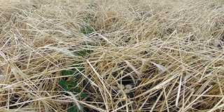 DU tours to show how cover crops improve soil health.