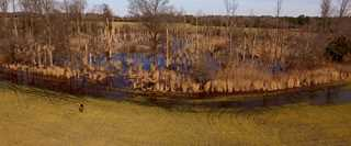 Ducks Unlimited installed infrastructure to protect this wetland from saltwater from nearby Delaware Bay.
