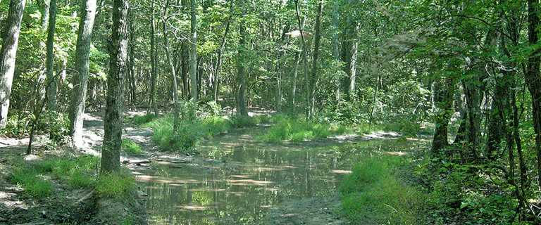 This 477-acre forested wetland tract will join Cape May National Wildlife Refuge.
