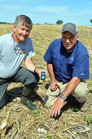 Dr. Jerry Moench (left) and Terry Kostinec, DU director of development, examine a duck nest in a cover crop field planted to soybeans.