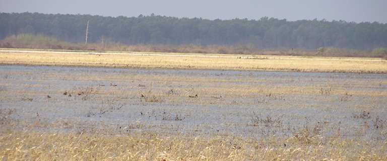 Waterfowl on Mahannah WMA.