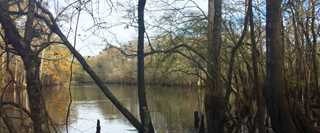View of the Black River on the Morris Tract.