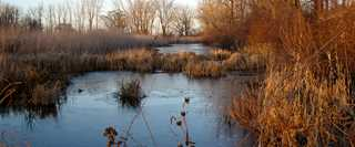 The GLRI has enabled Ducks Unlimited to conserve habitat for wildlife and people.