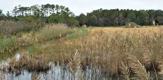 DU and DGIF improved habitat on the Princess Anne Wildlife Management Area, Virginia.