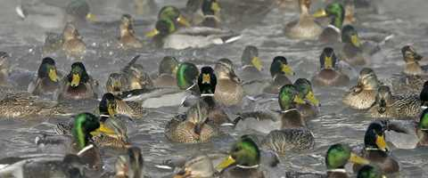 Migration Alert: Incoming Cold Weather Should Improve Hunting in ...