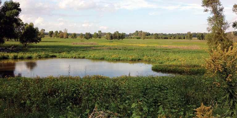 Jenkins Marsh, Illinois