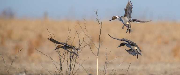 False Narratives Swirling Around Poor Waterfowl Hunting Season