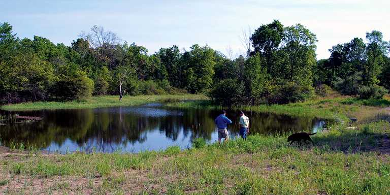 Matt Matuszak's restored ponds on his Washtenaw County property attract wildlife throughout the year.