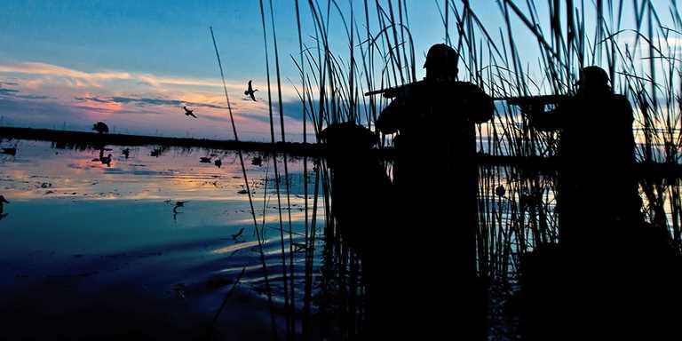 Shotgunning: Ducks over Decoys