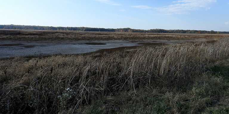 This area of Hovey Lake WMA will be transformed to a managed wetland.
