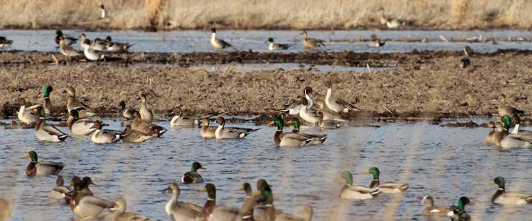 Migration Alert: South Dakota Habitat Primed by Unprecedented Precipitation