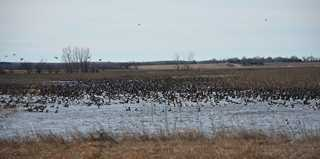 Waterfowl are already visiting the site