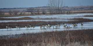 Prairie marsh in Jamestown