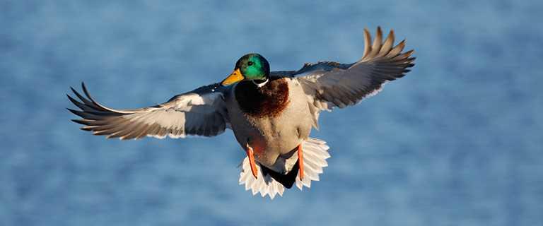 Migration Alert: Stagnant Weather Conditions Plague Oregon Hunters