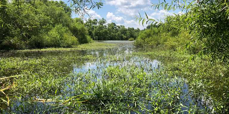 These degraded Pennsylvania wetlands will soon be restored for waterfowl and recreation.