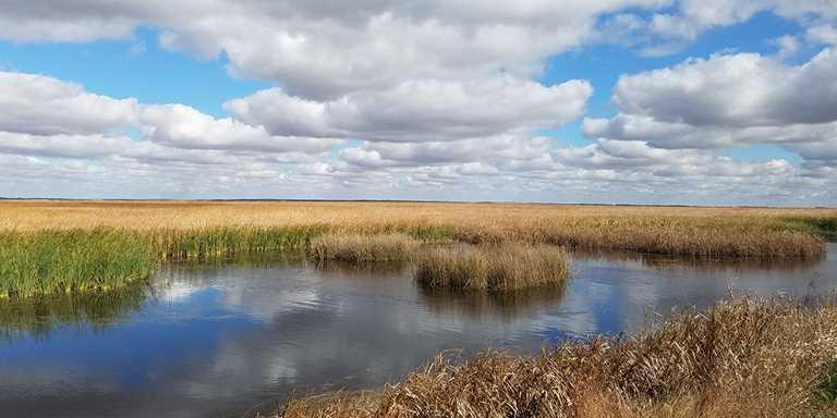 Kansas wetland