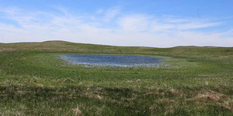 North Dakota wetland