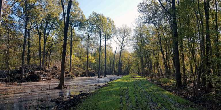 Forested wetlands like this are crucial to Illinois water quality and wildlife habitat.