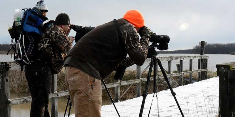 Participants observe waterfowl and shorebirds during a previous Maple River Migration Tour event.