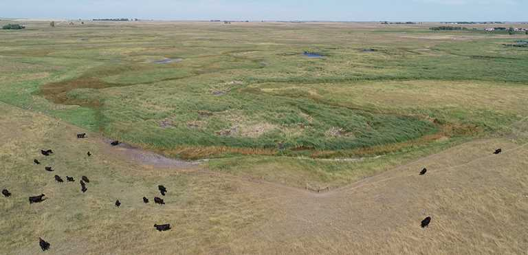 McPherson County, SD, ranch has improved its grass management with rotational grazing and help from DU.