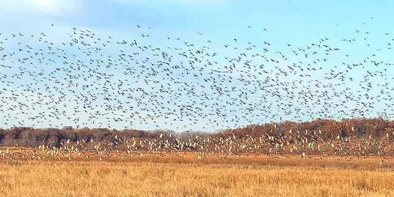 Swan Lake National Wildlife Refuge, Missouri.