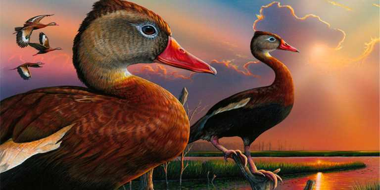 The winning 2019 Federal Duck Stamp art, an acrylic painting of a black-bellied whistling-duck pair by Alabama artist Eddie LeRoy.