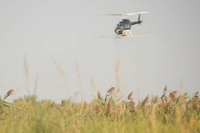 A hellicopter sprays invasive wetland grass along the Platte River.