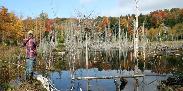 Vermont mitigation site.