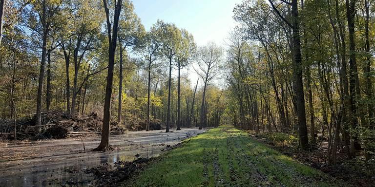 Illinois bottomland hardwood habitat.