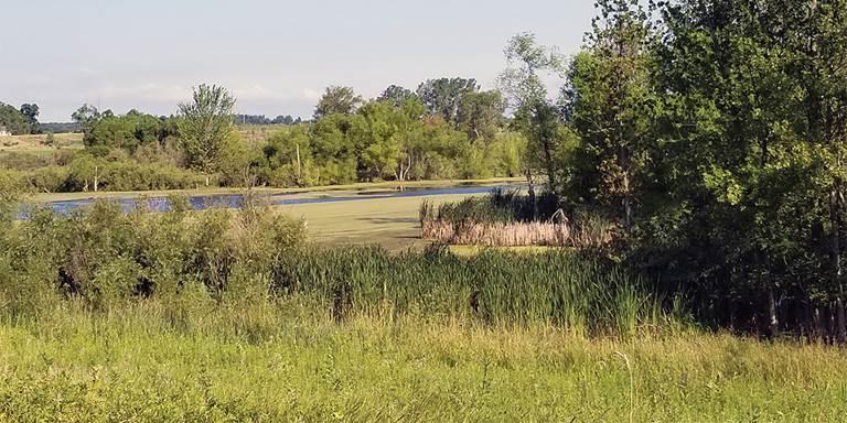 Cedar Swamp Wetland Conservation Area in Steuben County.