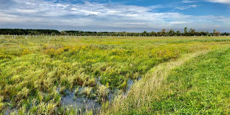 One year after Ducks Unlimited restored this retired farm field north of Utica, New York, waves of plant and animal life call it home.