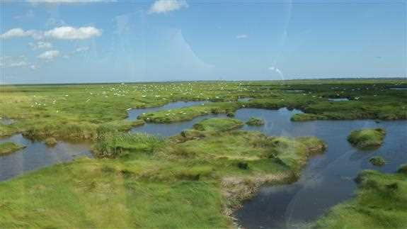 Ducks Unlimited will restore more than 21,800 acres of coastal marsh and prairie wetlands with 5 new NAWCA grants.